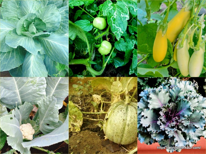 Is growing your own vegetables worth it